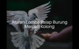 Aturan Lomba Balap Burung Merpati Kolong