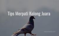 Tips Merpati Kolong Juara